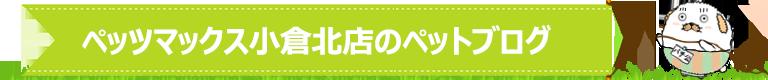 ペッツマックス小倉北店のペットブログ