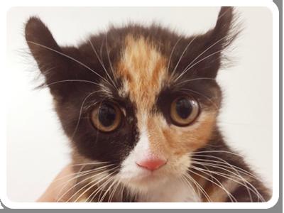 ネコちゃん(子猫)の画像