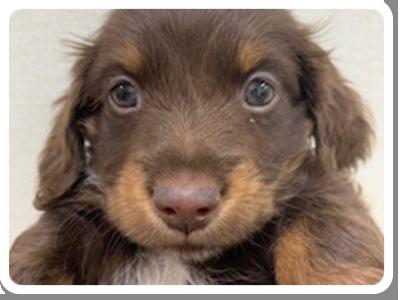 ワンちゃん(子犬)の画像