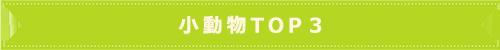 小動物TOP3