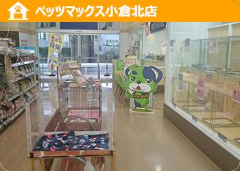 ペッツマックス 小倉北店