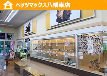 ペッツマックス 八幡東店