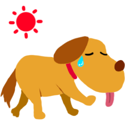暑さ、紫外線対策