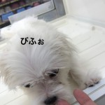 IMG_9577.JPG