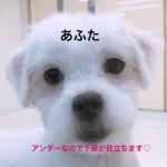 IMG_9578_1.JPG