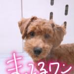 IMG_9584.JPG