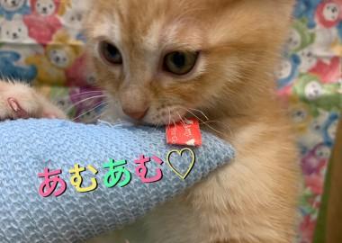 大野城店のNEWFACE★
