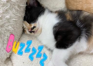 ベット気持ち~(-_-)zzz