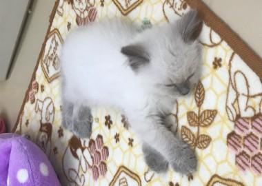 お眠(-_-)zzz