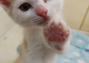 可愛い子猫ちゃん♥