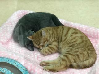 仲良くお昼寝♥