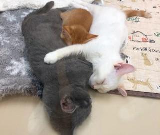 仲良くおやすみ♪
