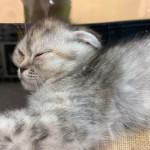 CAT011403.jpg