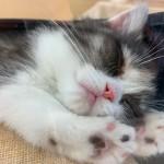 CAT0114402.jpg
