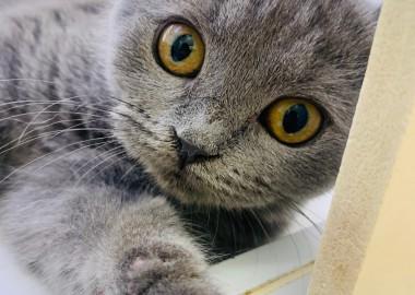 猫の日(=^・^=)