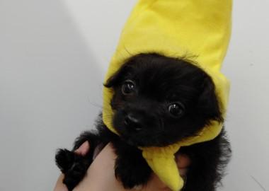 バナナマン♡