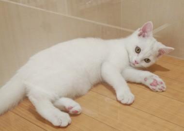 白猫ちゃん♪♪