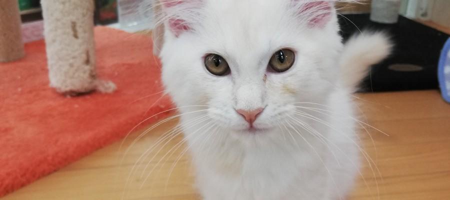 優雅な猫様