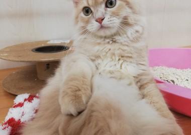優雅な猫さん