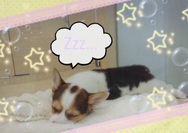 天使の寝顔♡
