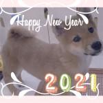 deco_2021-01-01_14-02-34.jpg