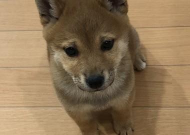ちょこん(´・ω・`)
