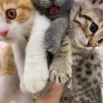 CAT20215.jpg
