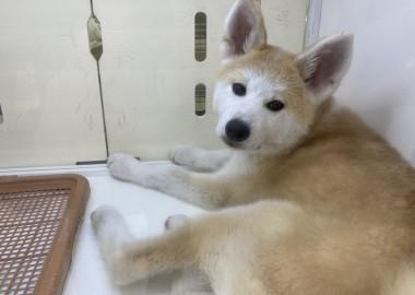 愛犬の日♡