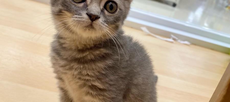 猫ちゃんズ=^_^=